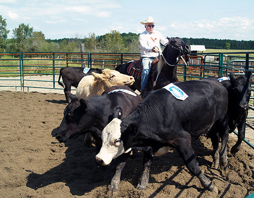 Northern Ontario News - The Temiskaming Speaker - Teamwork the name of the game at Cow Horse show